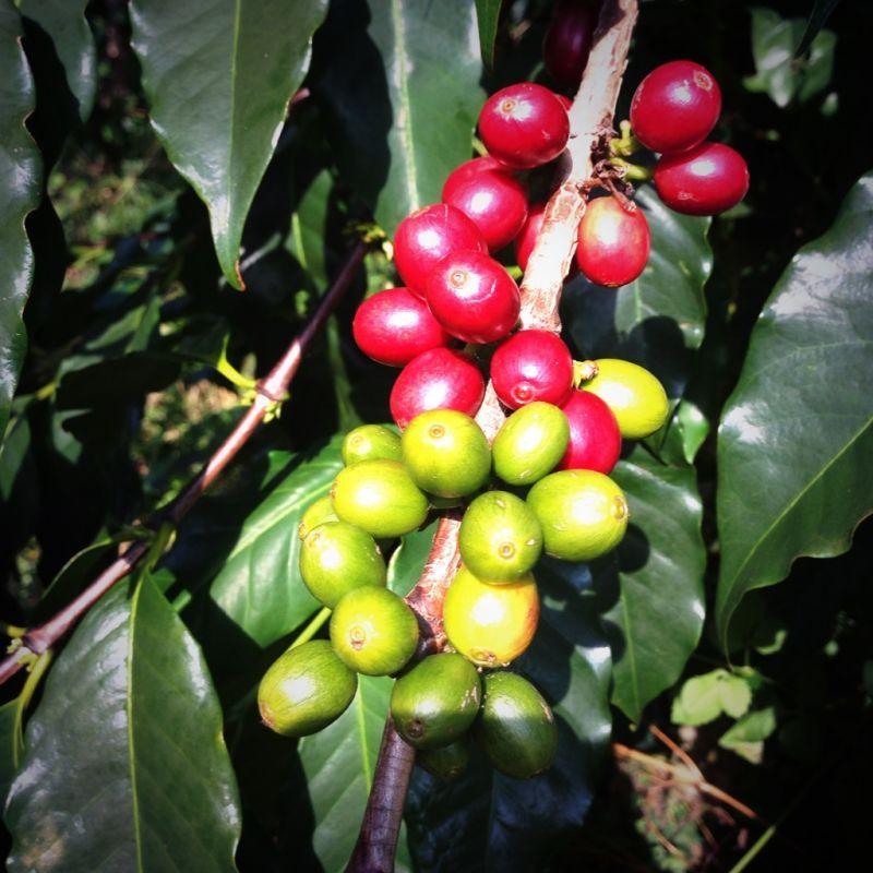 KONAcoffee