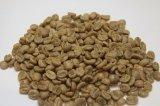 【生豆】タンザニア・キゴマ・ディープブルーAA